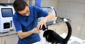 Küçükçekmece'de Kediye Köpek Dişi Müdahalesi