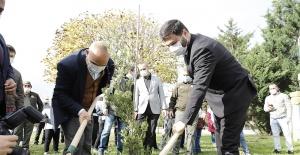 Kağıthane'de her köşebaşına ağaç